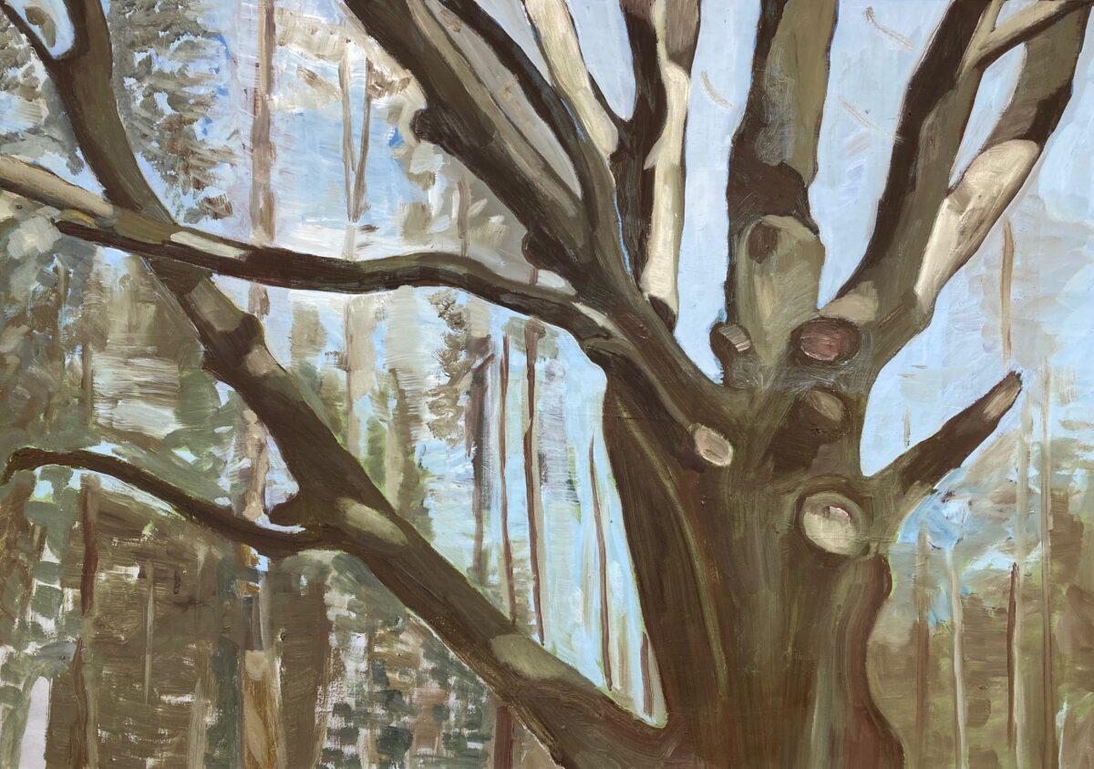 Eeuwenoude boom, olieverf op doek, 70-100 cm, 2021